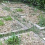 Jardin potager: comment préparer son sol?