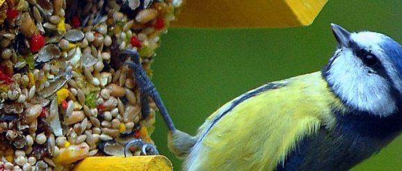 Un oiseau qui se nourrit