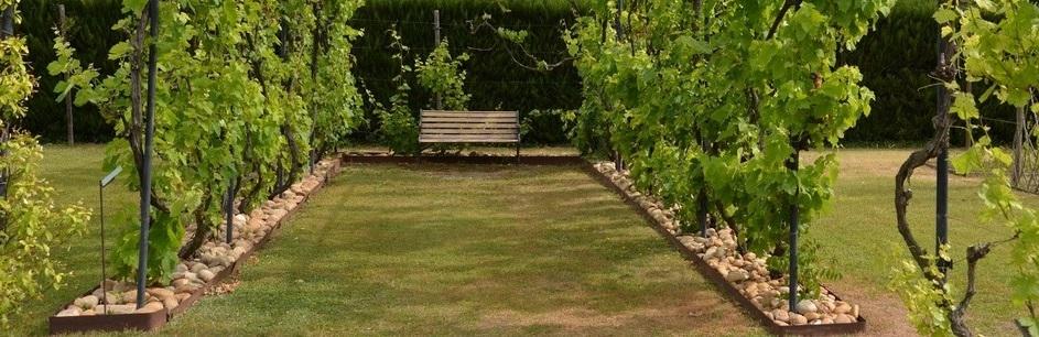 Un jardin avec des vignes