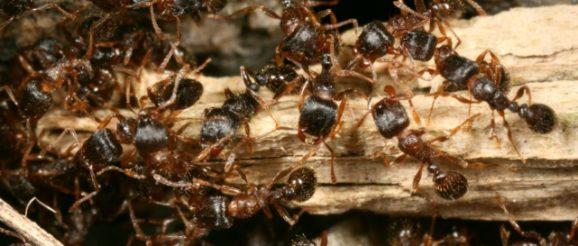 Un nid de fourmis