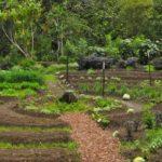 Comment mettre la permaculture au service de votre jardin?