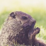 Trous dans la pelouse : quels animaux creusent dans votre jardin ?