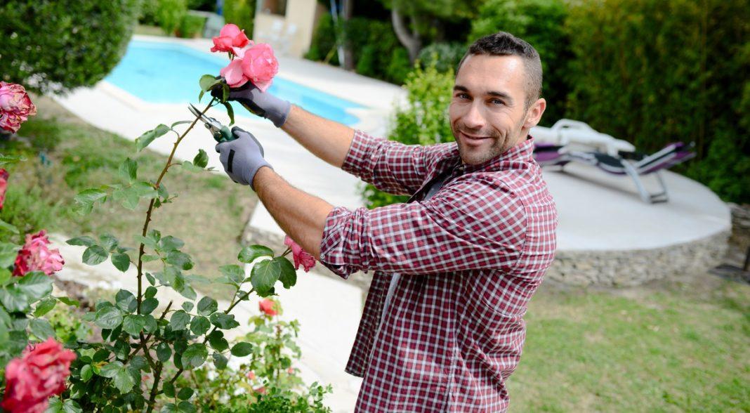 Jardin pelouse rose