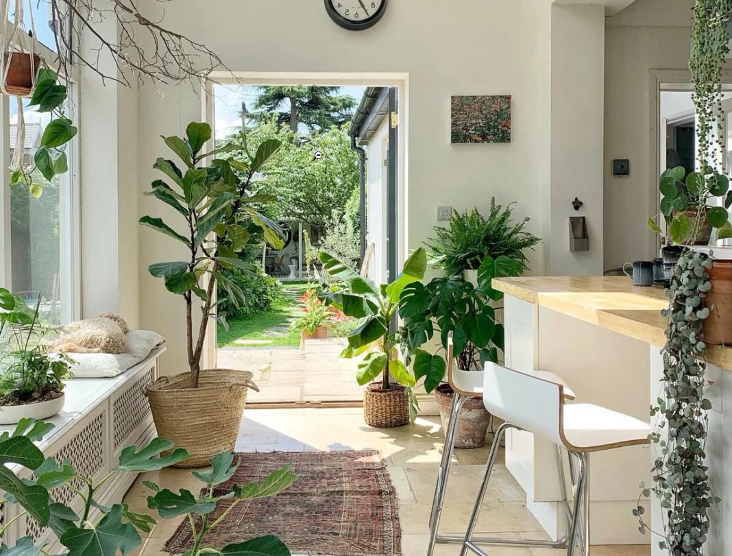 intérieur décoré avec plantes pour design biophilique