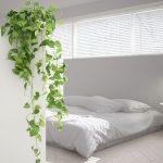 Les plantes tombantes ou grimpantes envahissent la décoration d'intérieur