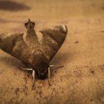 3 astuces pour chasser les papillons de nuit dans la maison