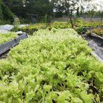 Toile de paillage : pourquoi le sol de votre jardin doit-il être protégé ?