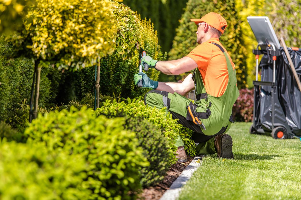paysagiste s'occupant d'un jardin
