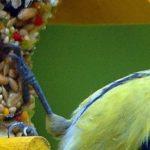 Petits conseils pour nourrir les oiseaux en hiver
