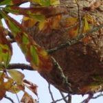 Identifier et détruire un nid d'abeilles dans une maison ou un jardin