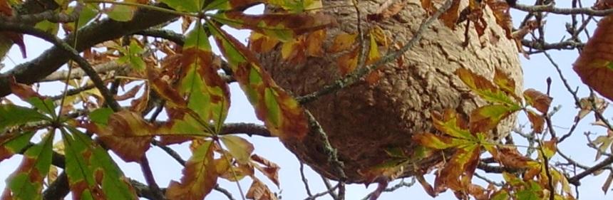 Un nid d'abeille dans un arbre