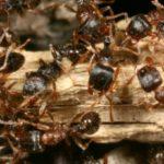 Les méthodes pour se débarrasser des fourmis dans le jardin