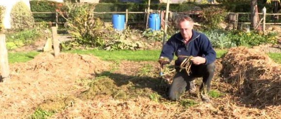 Préparation du jardin pour l'hiver