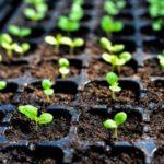 Semi d'intérieur : 3 faits à connaître pour réussir sa plantation