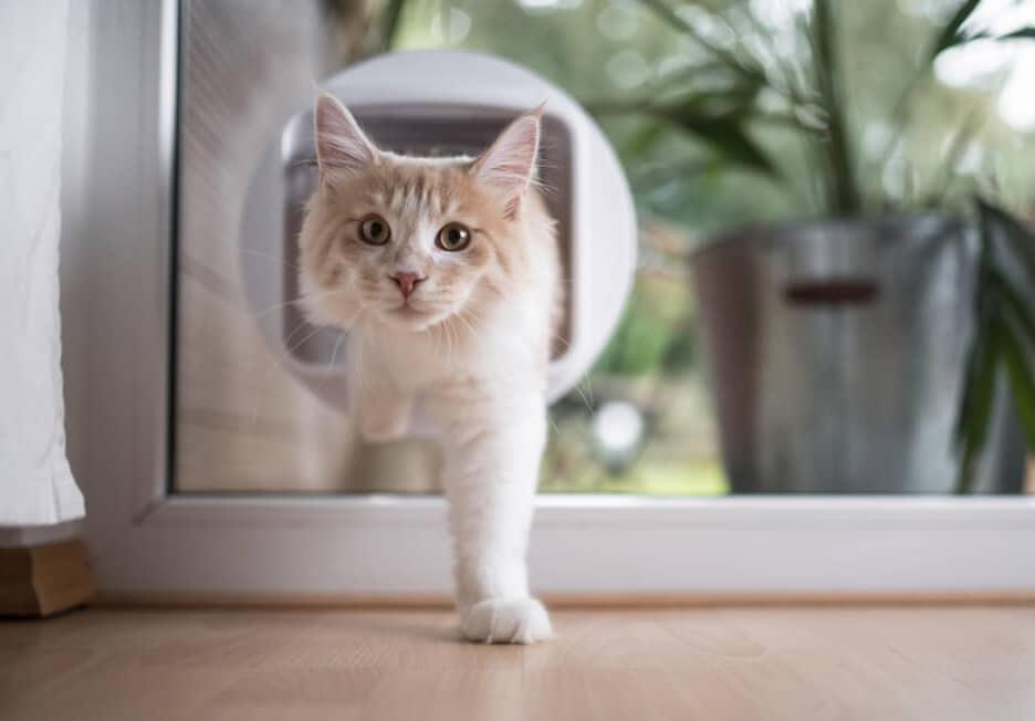 une chatière