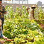 L'horticulture ou l'art de cultiver les jardins : définition et métiers