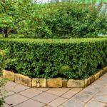 Comment installer une bordure de jardin ?