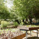 Réaliser son propre jardin thérapeutique