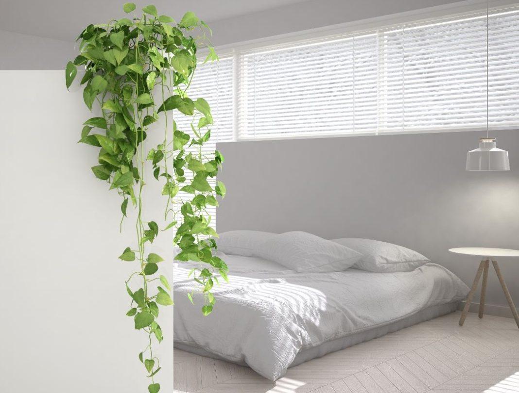 plantes intérieur décoration