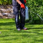 Canicule : comment soigner votre jardin ?